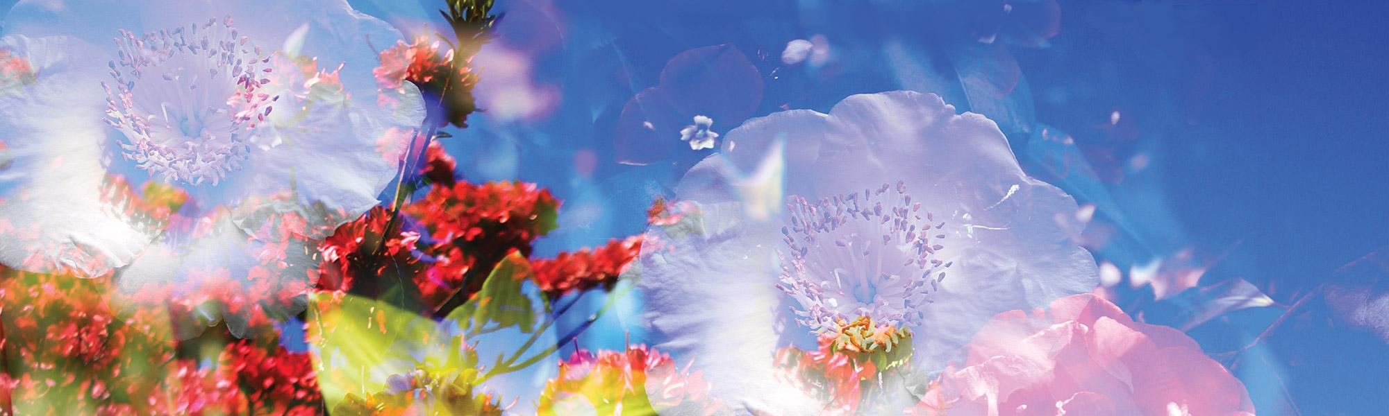 Blumenbanner
